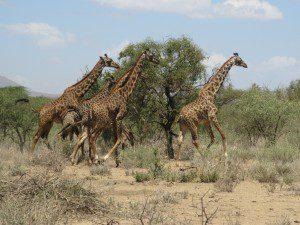 Tanzanie mars 2009 005