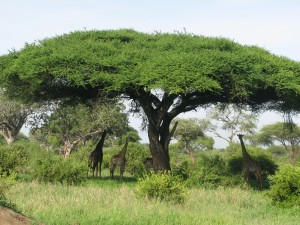 Tanzanie mars 2009